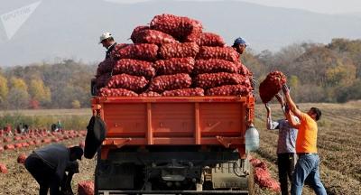 Кыргызстан быйыл 120,2 миң тонна картошка экспорттоду